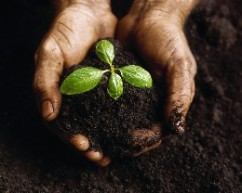 tend your garden